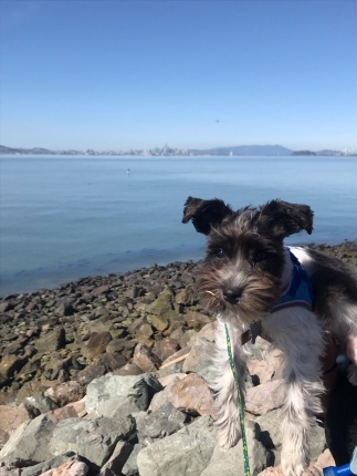 Theon's first walk in Oakland
